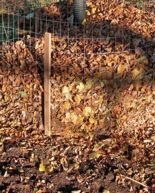 aprovechar-las-hojas-caidas-para-mejorar-el-suelo-04