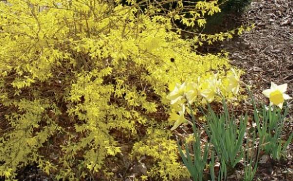 arbustos-para-jardines-con-pendiente-01