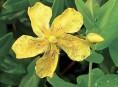 imagen Arbustos para jardínes con pendiente