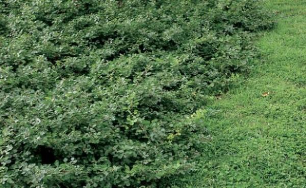 Jardines con arbustos free jardin arbustos rodeado rocas - Arbustos para jardin ...