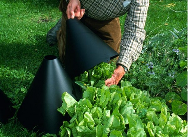 como-blanquear-verduras-y-hortalizas-01