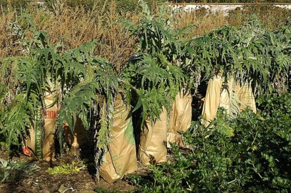 como-blanquear-verduras-y-hortalizas-03