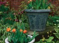 Cultiva azafr n en tu jard n - Como cultivar azafran ...