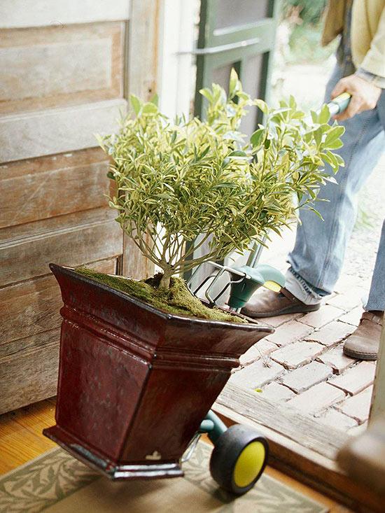 consejos-para-guardar-plantas-de-exterior-en-casa-01