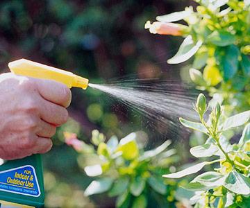 consejos-para-guardar-plantas-de-exterior-en-casa-02