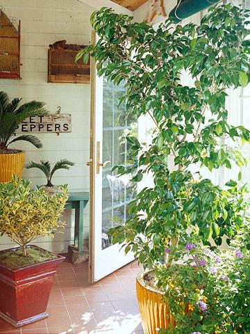 Consejos para guardar plantas de exterior en casa for Plantas de exterior