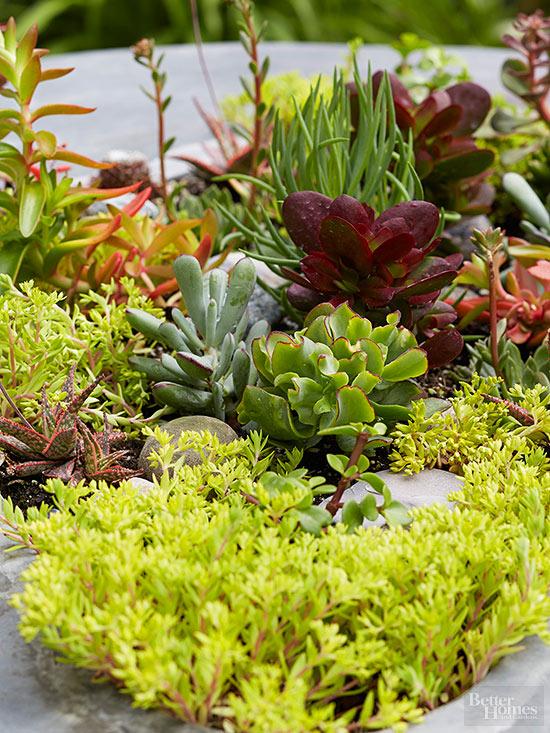 Cactus guia de jardineria jardines y plantas for Cactus cuidados exterior