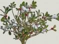 imagen Prepara tus plantas perennes para el invierno