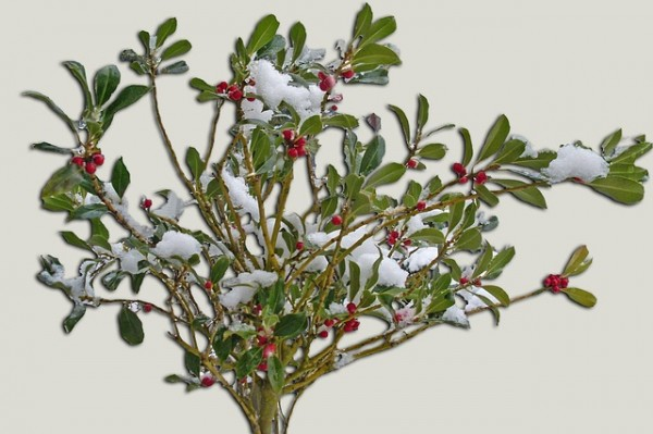 prepara-tus-plantas-perennes-para-el-invierno-02