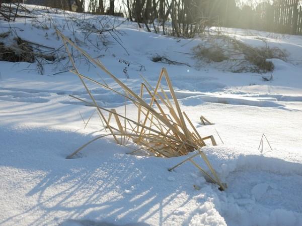 prepara-tus-plantas-perennes-para-el-invierno-03