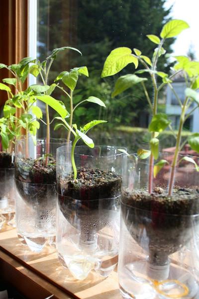 10 semilleros hechos con materiales reciclados