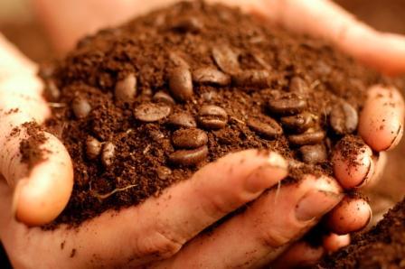 10-usos-de-los-posos-de-cafe-en-el-jardin-05