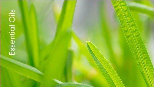 11-plantas-que-repelen-las-moscas-10