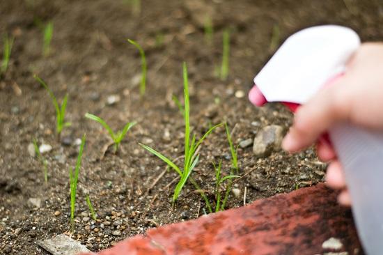 12 remedios orgánicos para tus plantas