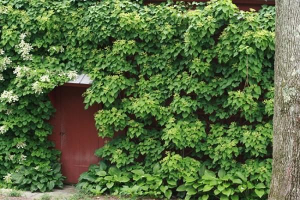 13-autenticos-jardines-secretos-10