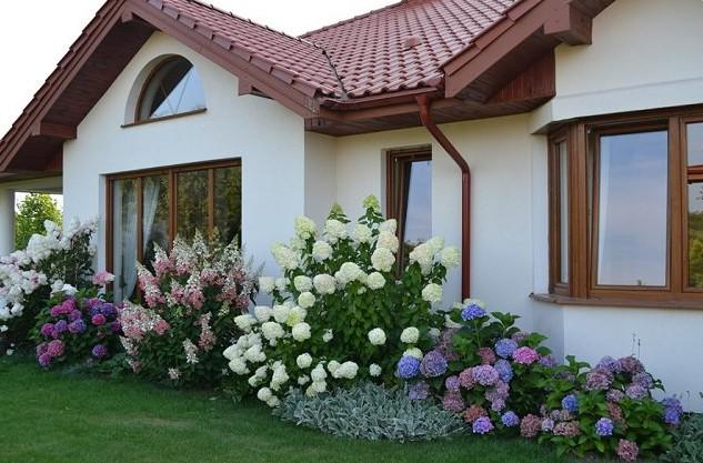 Hortensias gu a de jardiner a - Como cuidar una hortensia de exterior ...