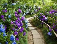 imagen 15 ideas de paisajismo con hortensias