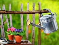 imagen 5 consejos básicos para iniciar un jardín con macetas