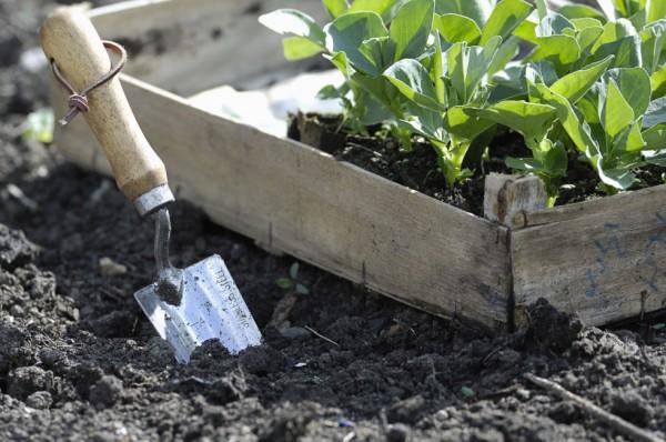 algunos-consejos-para-crear-un-jardin-10