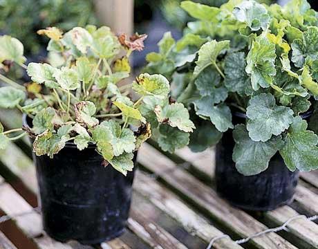 algunos-consejos-para-crear-un-jardin-11