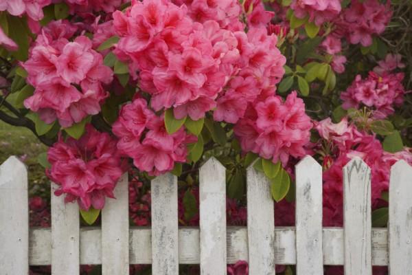 algunos-consejos-para-crear-un-jardin-15