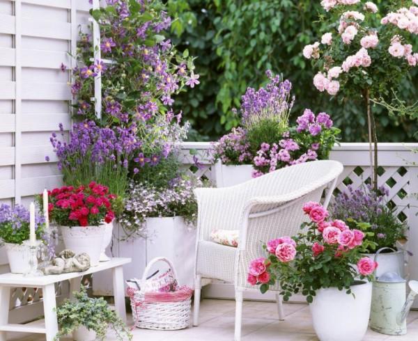 C mo cultivar rosas en maceta - Macetas para balcones ...