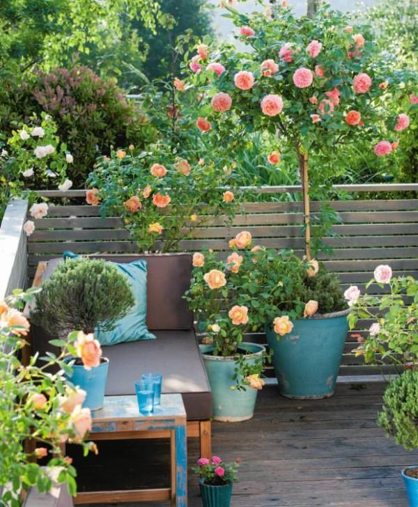 C mo cultivar rosas en maceta - Cuidados lavanda en maceta ...