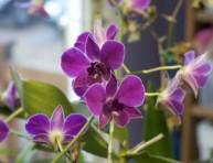 imagen Flores exóticas para cultivo en interior