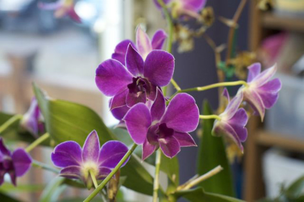 flores-exoticas-para-cultivo-en-interior-01