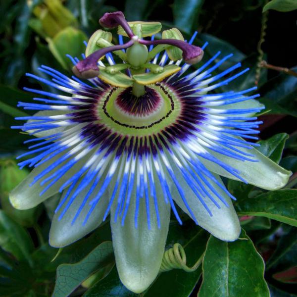 flores-exoticas-para-cultivo-en-interior-02