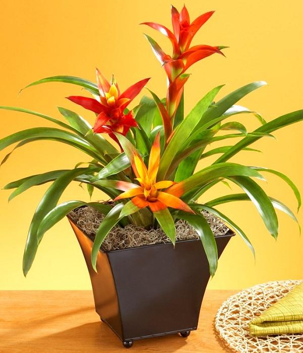 Las 17 mejores plantas de interior for Plantas decorativas de interior