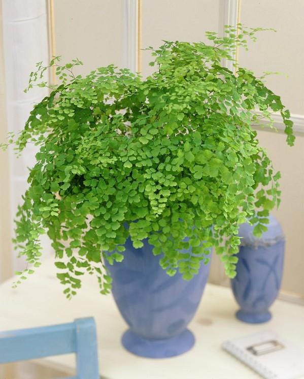 Ideas Diferentes Para Decorar Con Plantas Decocasa - Plantas ...