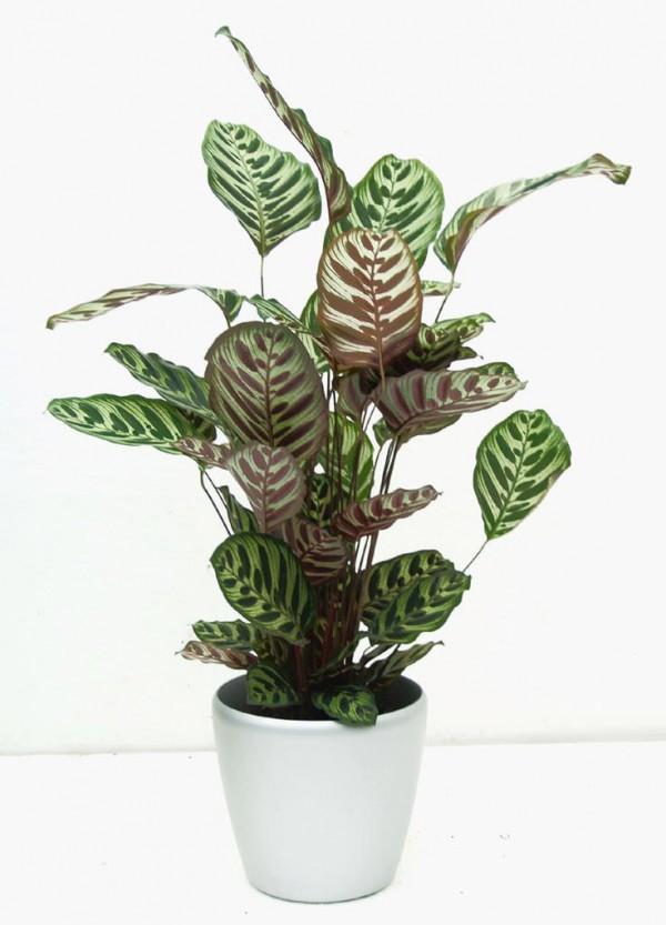 Las 17 mejores plantas de interior - Plantas de interior tropicales ...