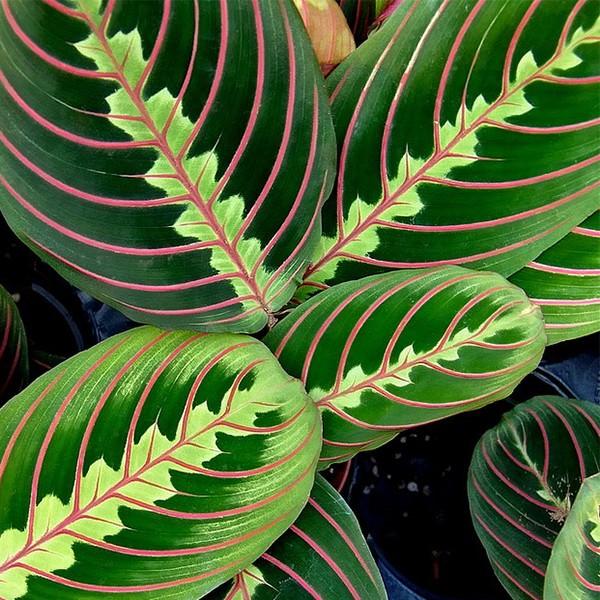 Las 17 mejores plantas de interior for Planta tropical interior