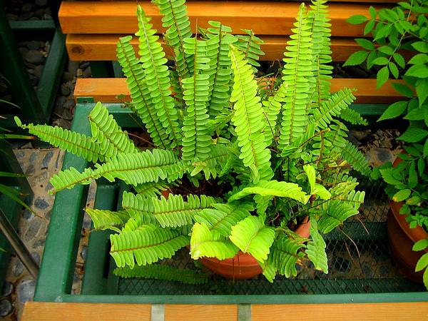 Las mejores plantas de interior jardineria informaciones agronomicas - Las mejores plantas de interior ...