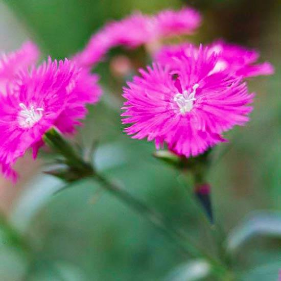 las-mejores-flores-para-perfumar-tu-jardin-01