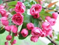 imagen Las mejores flores para perfumar tu jardín