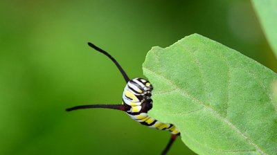 preparar-pesticidas-naturales-de-forma-sencilla-01