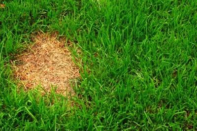 preparar-pesticidas-naturales-de-forma-sencilla-05