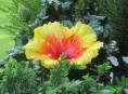 imagen 5 bellas flores que pueden cuidar tu piel