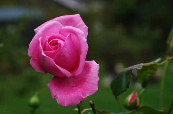 5-bellas-flores-que-pueden-cuidar-tu-piel-02