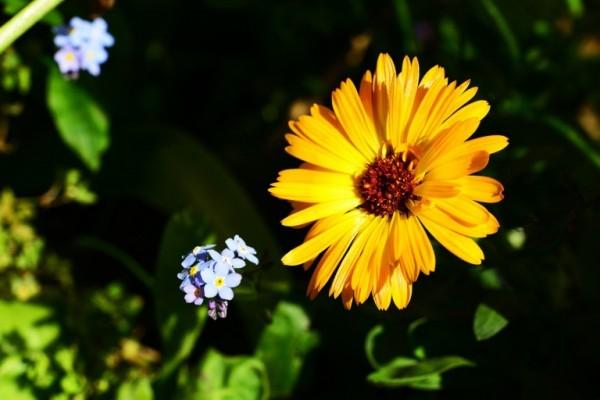 5-bellas-flores-que-pueden-cuidar-tu-piel-04