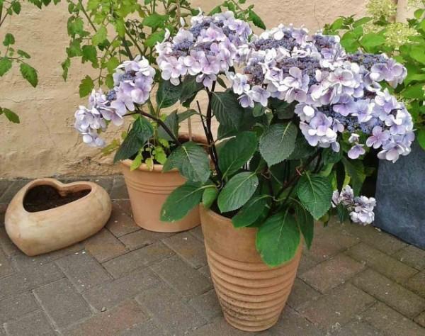 7-consejos-para-que-tu-jardin-parezca-mas-grande-03