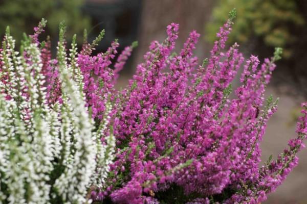 7-consejos-para-que-tu-jardin-parezca-mas-grande-04