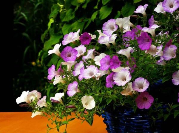 7-consejos-para-que-tu-jardin-parezca-mas-grande-08