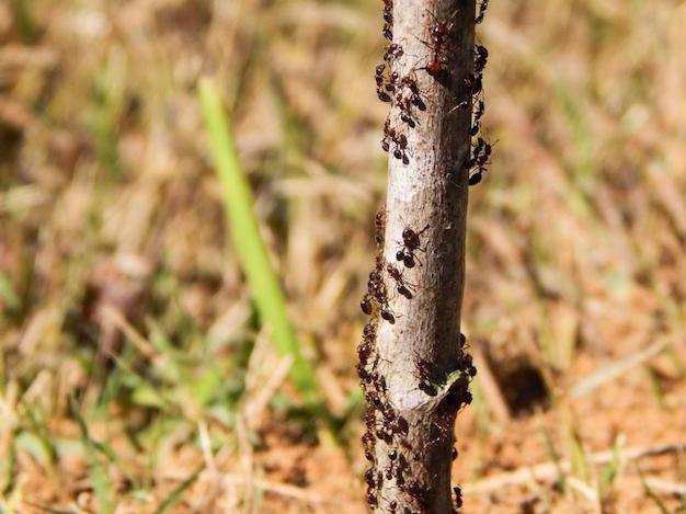 como-evitar-hormigas-trepen-plantas