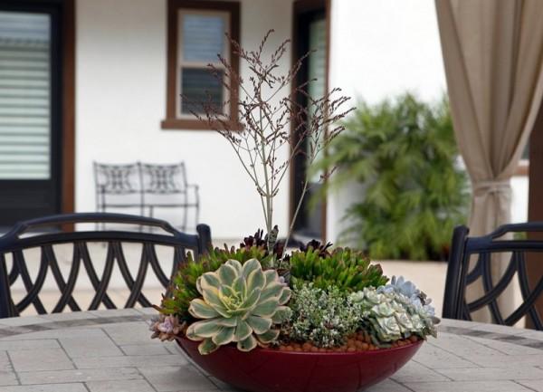 as-mount-un-mini-jardin-de-succulenta-01