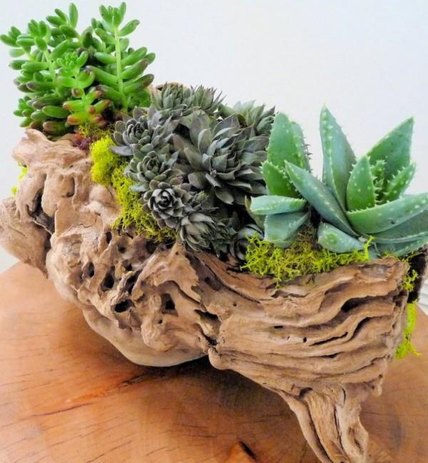 Composiciones de plantas y madera recuperada del mar