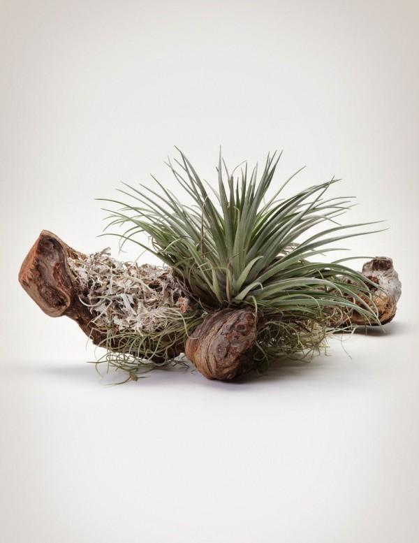 composiciones-de-plantas-y-madera-recuperada-del-mar-03