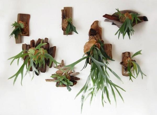 composiciones-de-plantas-y-madera-recuperada-del-mar-04